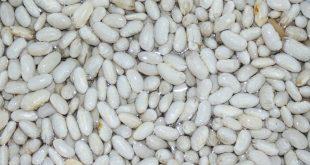 soak-white-beans